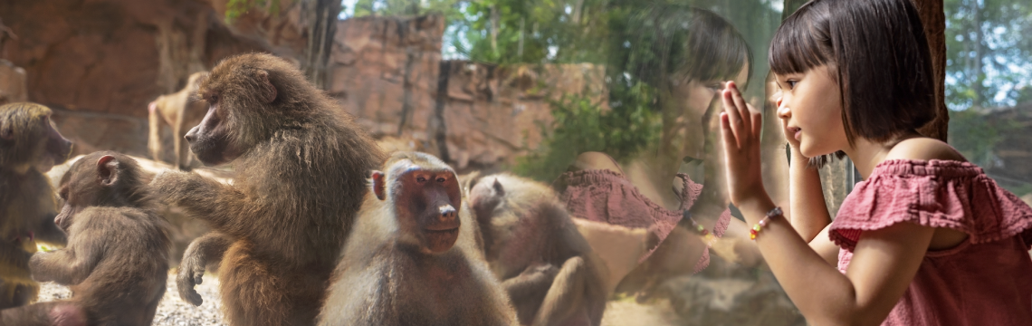 Great Rift Valley of Ethopia - Hamadryas Baboons.png-1140x360